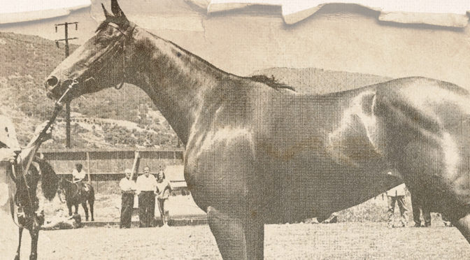 Wellington Polo Icons To Be Inducted Into Hall Of Fame