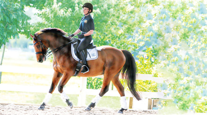Gold Coast Dressage Association Turns 35 With  Noreen O' Sullivan At The Helm