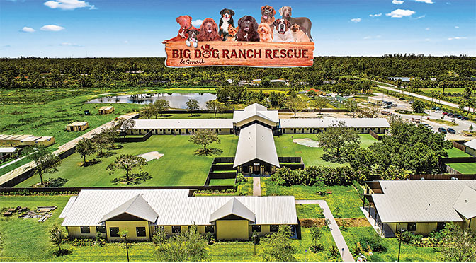 Big Dog Ranch Rescue Where Dogs Get A New Lease On Life