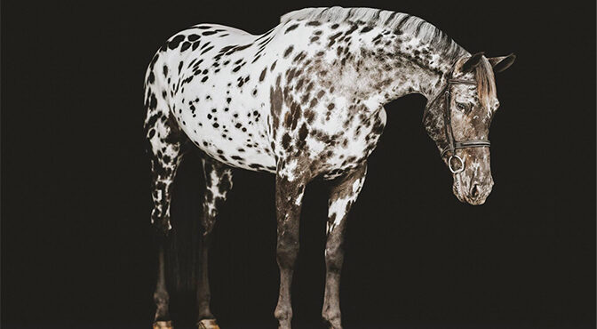 Daring To Be Different: Wellington's  Spotted Sporthorse Dani A Sight To See Unique Horse